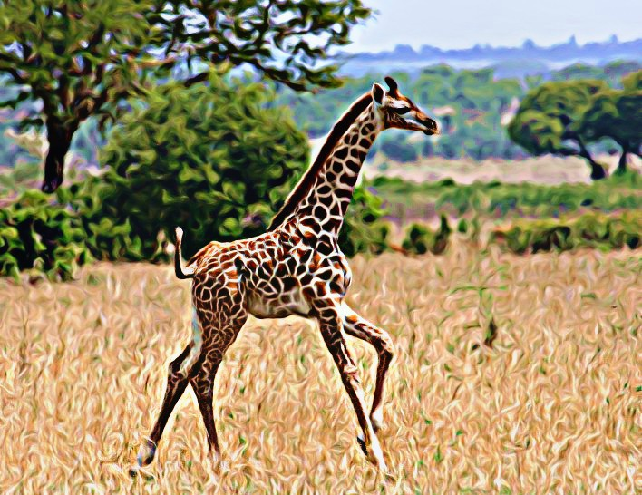 How many species of Giraffe are there?