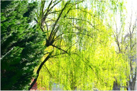 past the willow