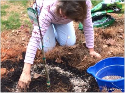 "planting the ""Myrt"" tree"
