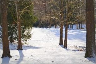 Tyler Run Park