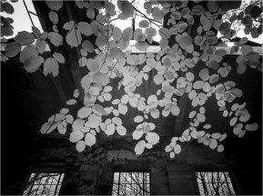 Ruinen 2 [© Thomas Steinbichler, 2015]