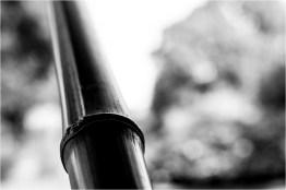 11_Bambus [© Peter Paulhart, 2014]