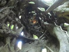 Der geheime Baum von innen