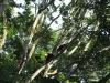 Affe in Monteverde