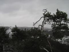 Aussicht an der Bastei Rathen