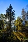 Herbstfarben Lofoten