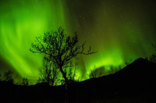 Nordlichter mit Baum