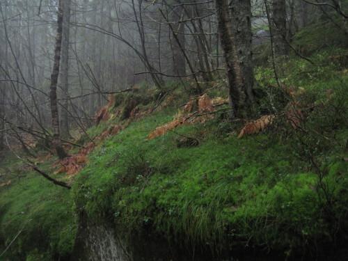 Regen-Wald.