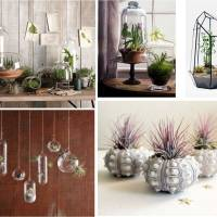 DIY Terrarium: My very own jungle