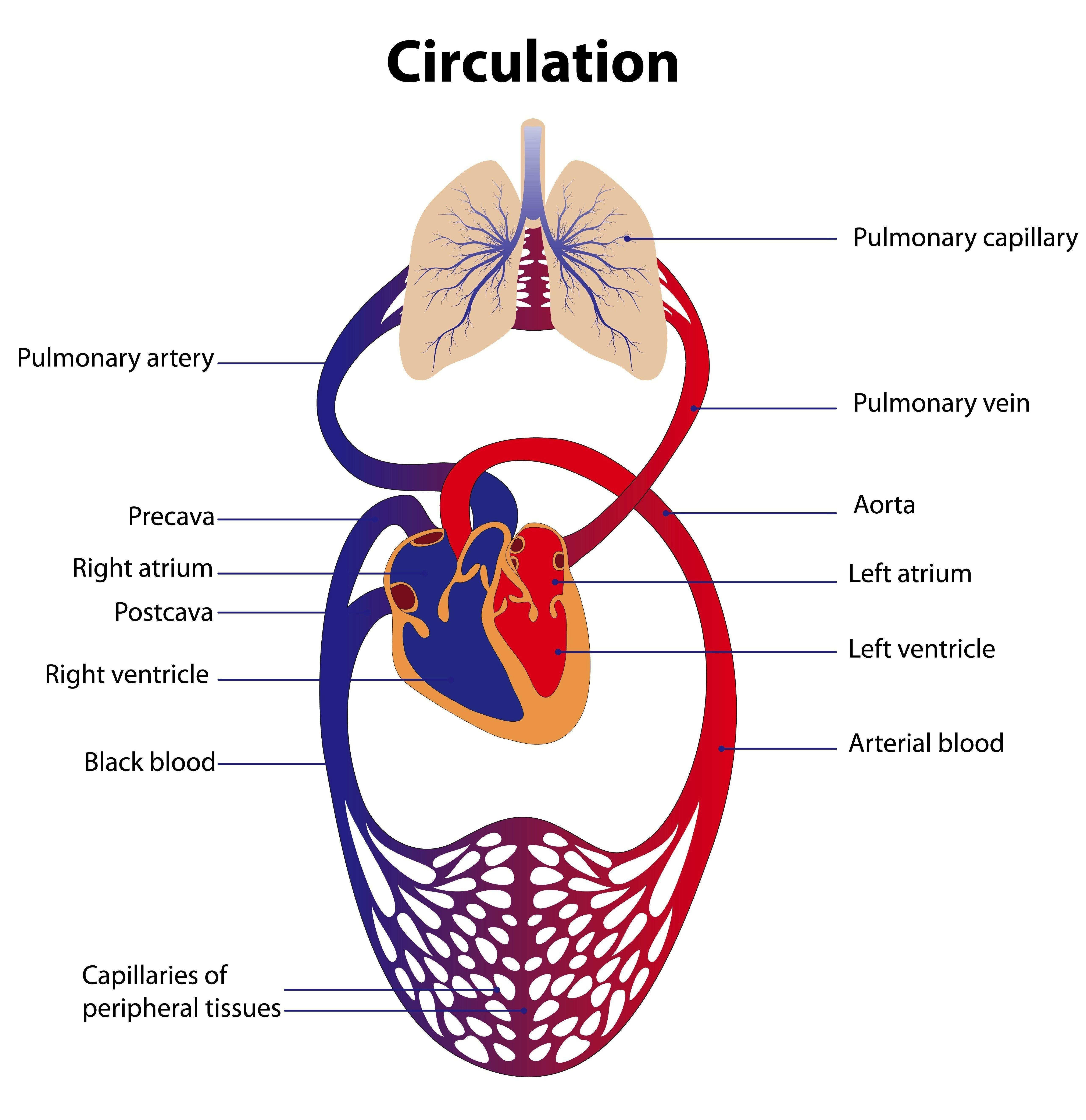 Nsan Anatomisi