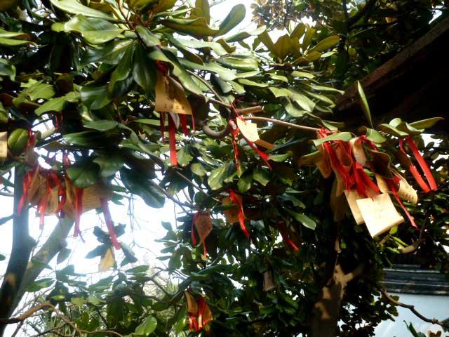 Zikadenmarkt, Pyjamamoden und taiwanesisch Essen