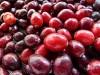 Die Cranberrys
