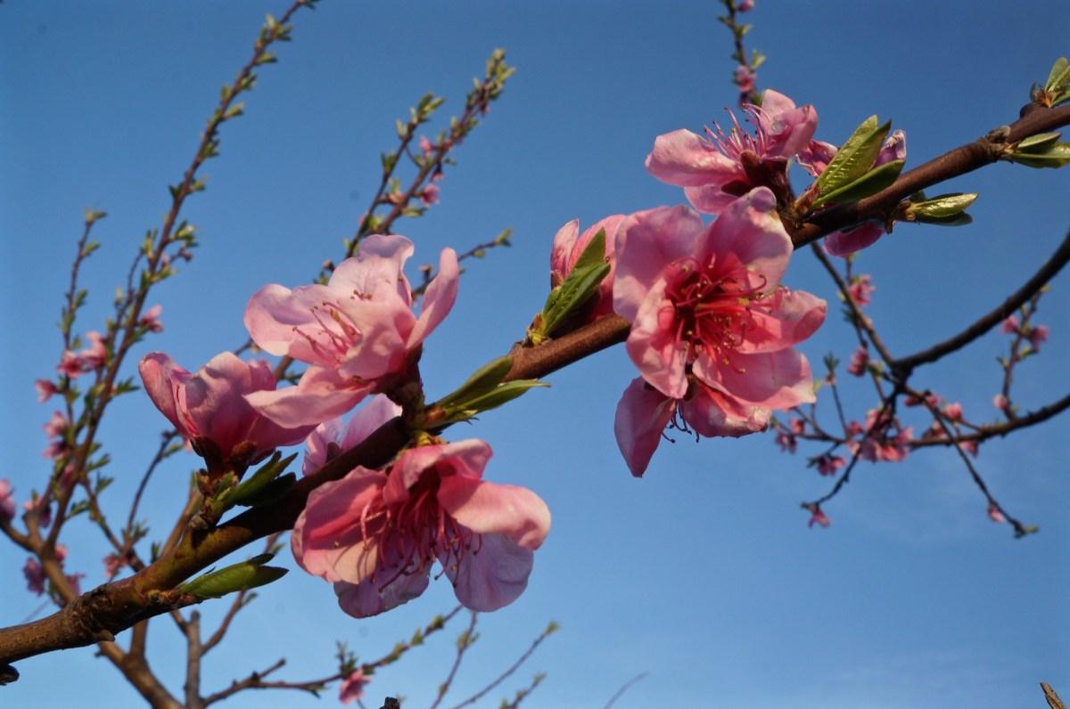 Blüten überall