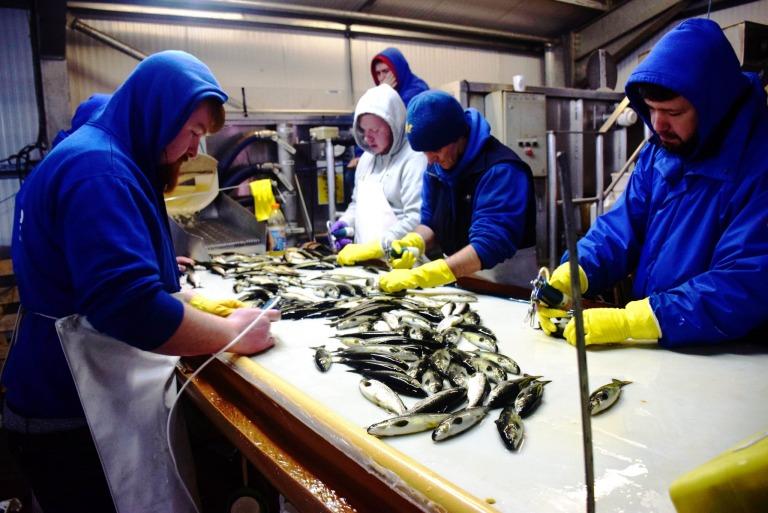 Auf dem Weg zu den schottischen Label Rouge Lachsen