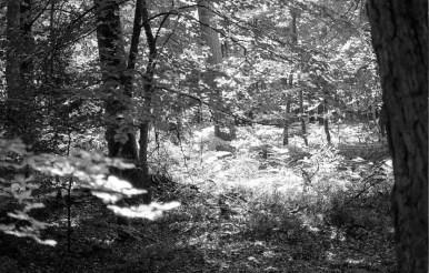 Woodland scene 1985 4