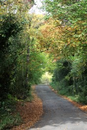 Rodlease Lane