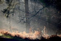 Forest sunlight shafts 3