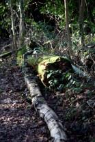 Honeylake Wood 3