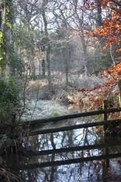 Stream and woodland