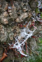 Frost on tree trunk 1