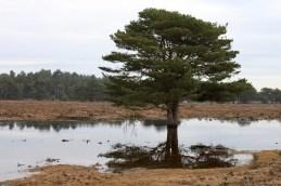 Tree reflected 1
