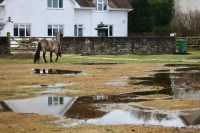 Pony, pools, and reflections 1