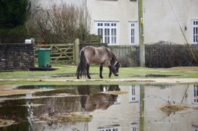 Pony, pools and reflection 3