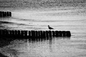 Gull on breakwater