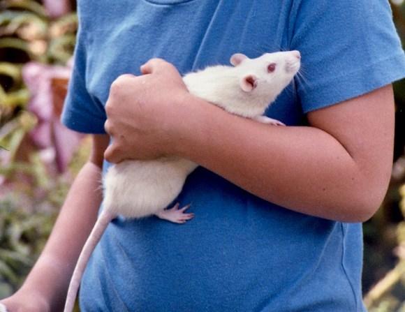 Sam and Ratty 1 – crop