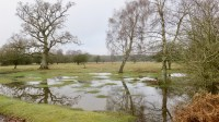 Landscape waterlogged 1