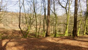 Forest scene 1