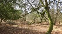 Forest scene 6