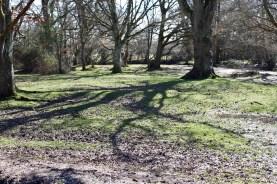 Shadows of trees 1