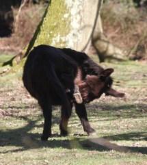 Donkey scratching 2
