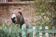 Donkey in garden 5
