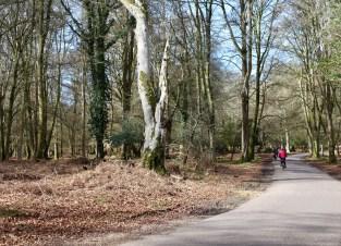 Cyclists on Rhinefield Ornamental Drive 2