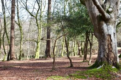 Forest scene 8