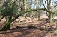 Forest scene 10