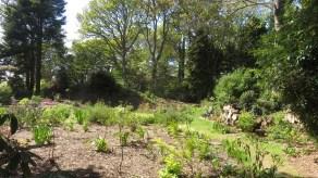 MacPenny's garden 1
