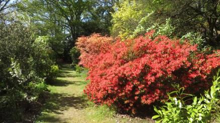 MacPenny's garden 3
