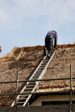 Thatching progress 4