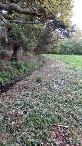 Cut undergrowth