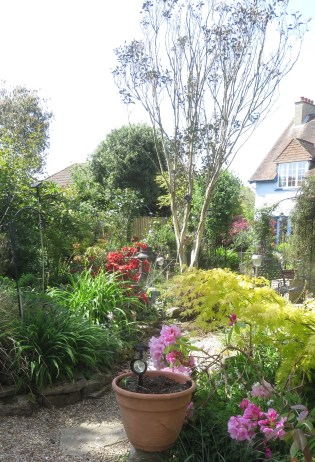 Garden view from Fiveways to Compassion rose arch