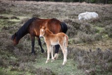 Mare and foal 6
