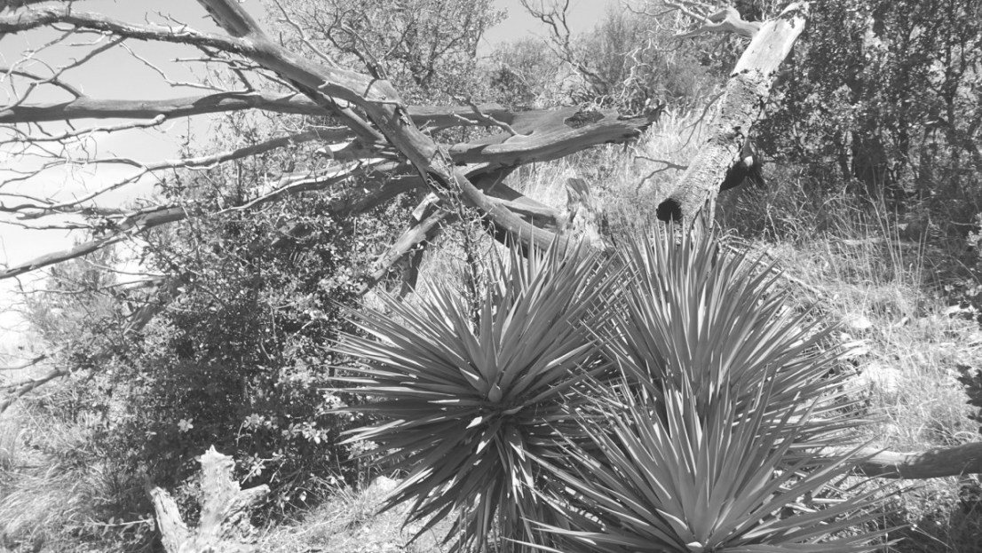 Black and white photo AZT - Passage 12: Oracle Ridge