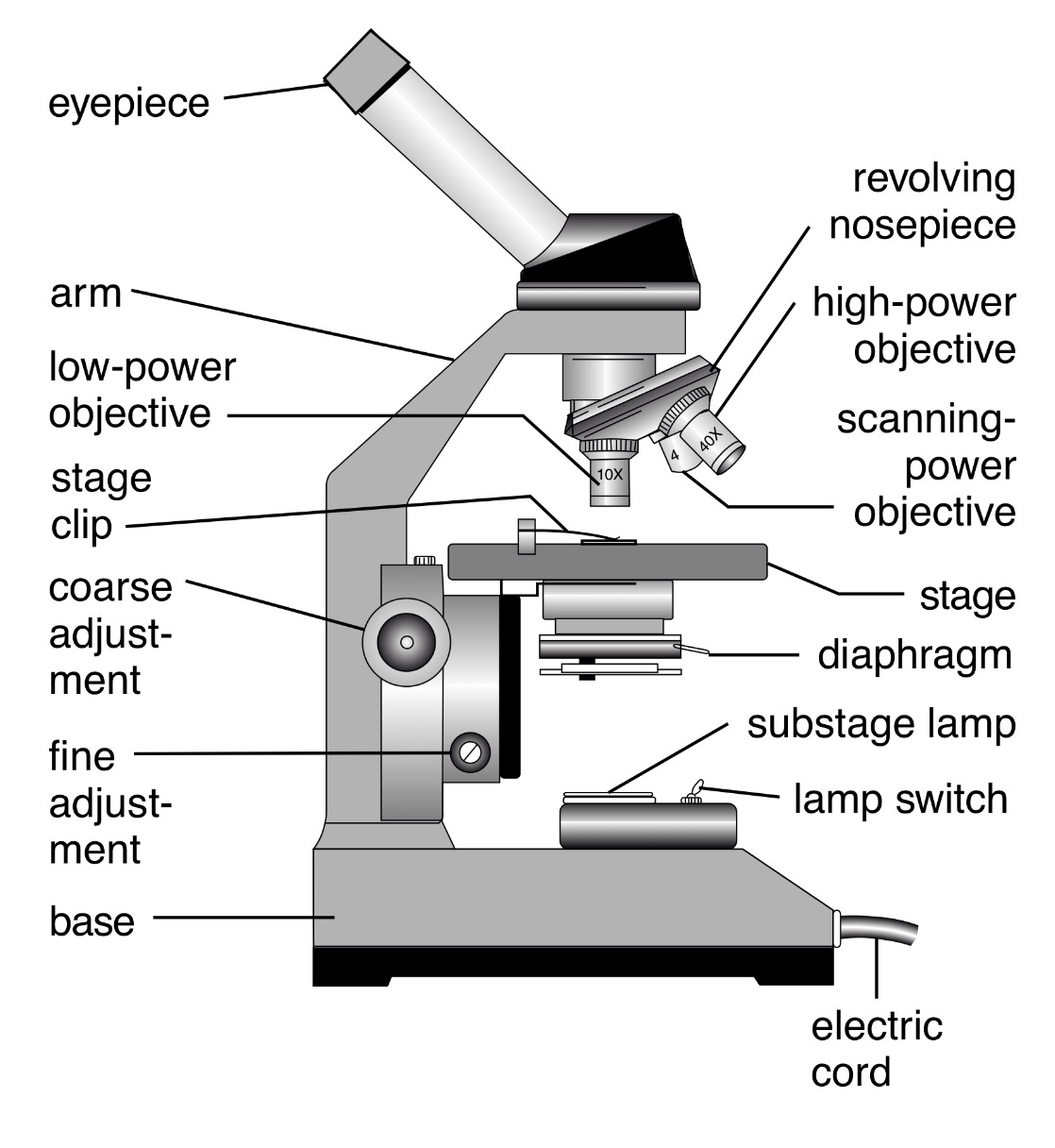 Compound Microscope Lab Derrickturnerbcp19
