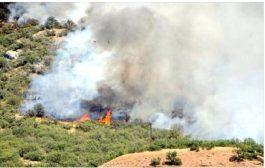 Avrupa'da değişik kurumlardan Dersim'deki yangınlara ilişkin ortak Basın Açıklaması