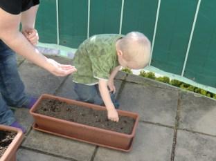 Simon konzentriert beim Bepflanzen eines Blumenkästchens.