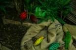 Arrangierte Kakaobohnen.