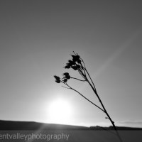 Weekly Photo Challenge: Serenity